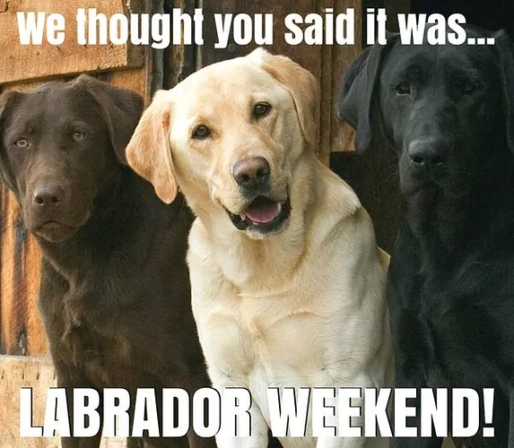 Labrador weekend