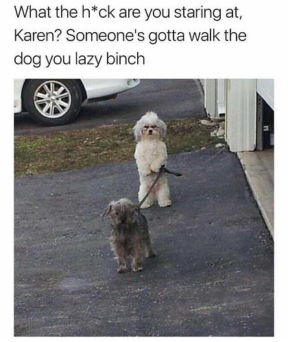 what-the-hck-are-you-staring-at-karen-someones-gotta-walk-the-dog-you-lazy-binch-esdjr